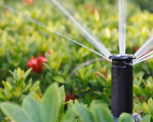 watering-gardenia-plants